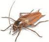 От тараканов