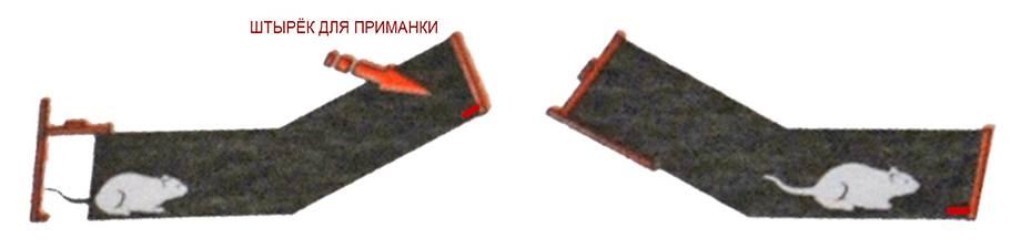 Схема использования мышеловки Леопольд