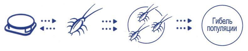 Раптор ловушка для тараканов с приманкой внутри