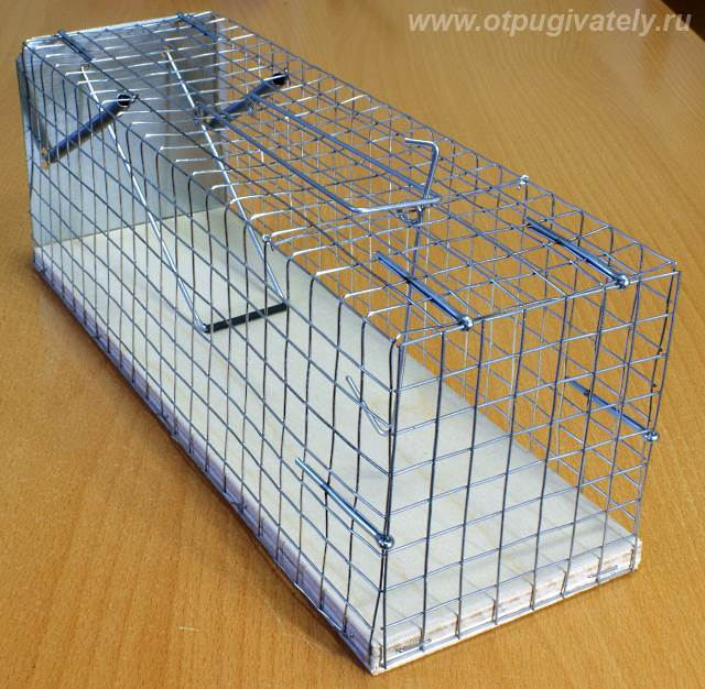 Клетка для крысы своими руками в домашних условиях
