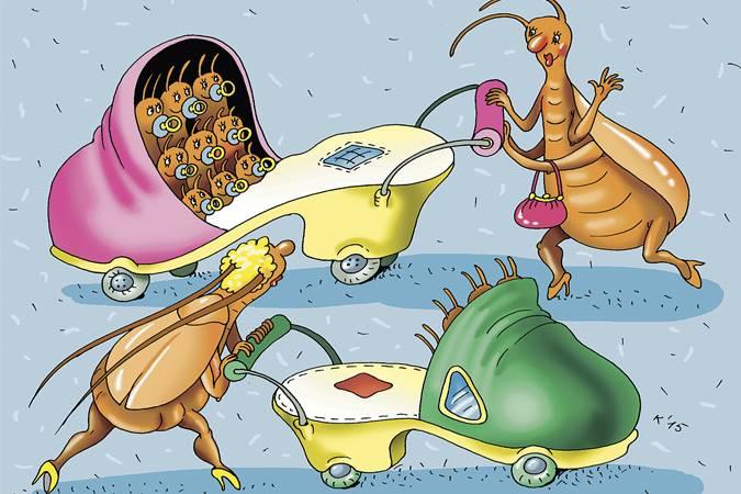 У тараканов наблюдается демографический взрыв